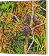 Pine Cones And Needles On A Branch Wood Print