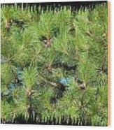 Pine Cones And Needles Wood Print