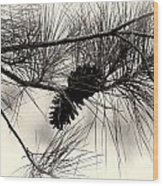 Pine Cones In The Treetops Wood Print