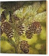Pine Cones No.056 Wood Print