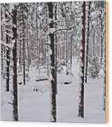 Pine Forest In January Wood Print