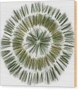 Pine Needle Flower Wood Print by David Esslemont