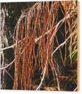 Pine Needles Wood Print