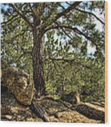 Pine Tree And Rocks Wood Print