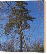 Pine Tree Standing Tall Wood Print