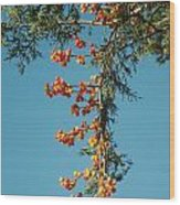 Pine Tree With Berries Wood Print