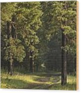 Pine Trees Forest Wood Print
