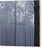 Pine Trees In Cloud In The Forest Corona Wood Print