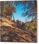 Pine Trees In El Chorro. Spain Wood Print