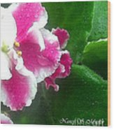 Pink African Violets And Leaves Wood Print