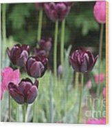 Pink And Purple Tulips Wood Print