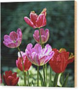 Pink And Red Tulips Wood Print