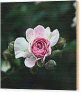 Pink And White Flower Wood Print