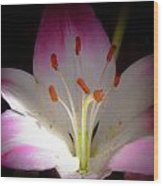 Pink And White Lily Wood Print