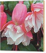 Pink And White Ruffled Fuschias Wood Print