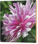 Pink Anemone From The St Brigid Mix Wood Print