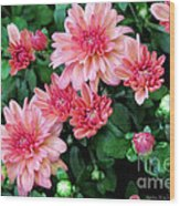 Pink Autumn Mums Wood Print