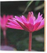 Pink Beauty Wood Print