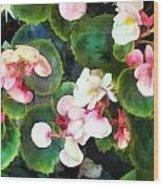 Pink Begonias Wood Print