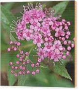 Pink Wood Print by Beverly Hammond