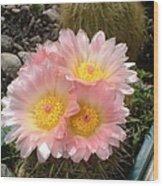 Pink Cactus Wood Print