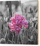 Pink Carnation Wood Print by Sumit Mehndiratta