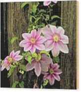 Pink Climatis Flower Wood Print