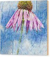 Pink Coneflower On Blue Wood Print