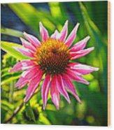 Pink Coneflower Wood Print