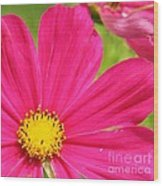 Pink Cosmo Wood Print