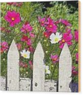 Pink Cosmos Flowers And White Picket Fence Wood Print