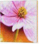 Pink Cosmos On Orange Wood Print