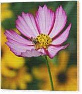 Pink Cosmos Picotee And Bee Wood Print