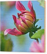 Pink Dahlia Poster Wood Print