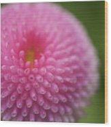 Pink Daisy Flower Wood Print by Myu-myu