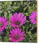 Pink Daisy's Wood Print