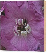 Pink Delphinium Wood Print