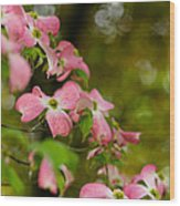Pink Dogwood Blooms Wood Print