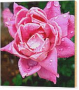 Pink Double Knockout Rose Wood Print