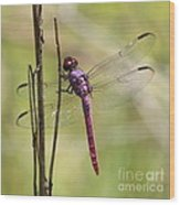 Pink Dragonfly With Sparkly Wings Wood Print