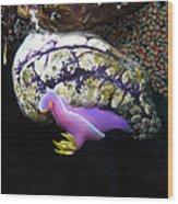 Pink Durid Nudibranch Wood Print