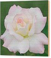 Pink Edge White Rose Wood Print