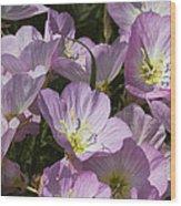 Pink Evening Primrose Wildflowers Wood Print