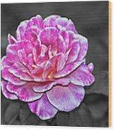 Pink Flame Wood Print