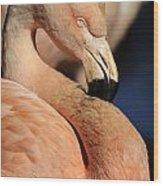 Pink Flamingo 8 Wood Print