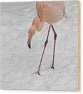 Pink Flamingo  Wood Print