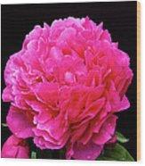 Pink Flower After Rain Wood Print