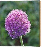 Pink Flower Ball Wood Print
