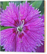 Pink Flower Miss You Wood Print