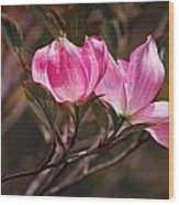 Pink Flower Tree Blossoms No. 247 Wood Print